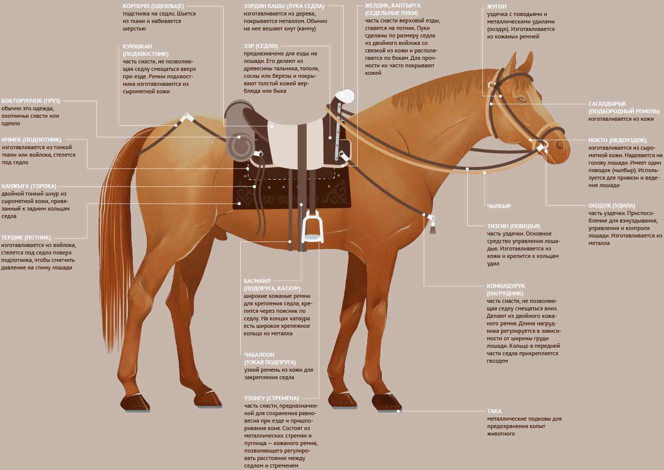 детали снаряжения кыргызской лошади