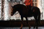 Всадник на лошади. Архивное фото
