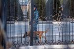 Сотрудник МВД с собакой во время оцепления аэропорта Манас, куда поступила сообщение о бомбе