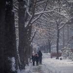 Белоснежный пейзаж в Дубовом парке