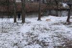 Парень стоит у реки в холодную погоду. Архивное фото