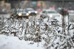 Снег. Архивное фото