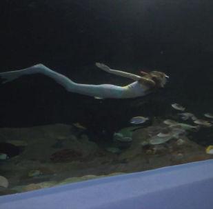 В Астане есть океанариум, попавший в Книгу рекордов Гиннеса. Там обитают более ста видов рыб и морских животных — всего около двух тысяч существ. За чистотой следят русалки. Журналисты узнали, как им работается в аномальные морозы.