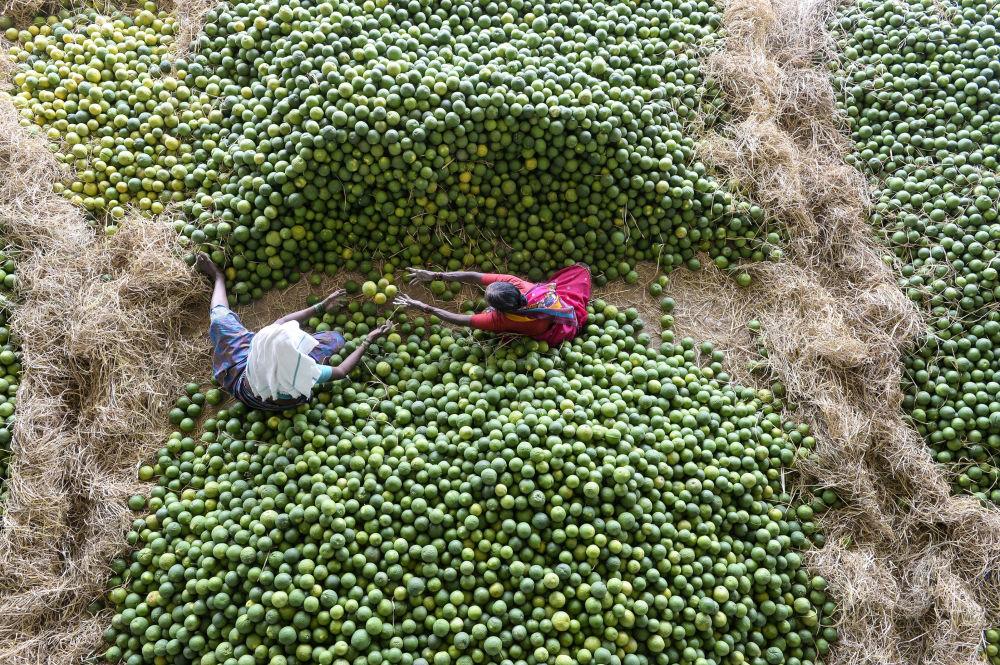 Индийские рабочие перебирают фрукты на рынке близ Хайдарабада.