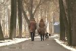 Съемочная группа Sputnik три дня бегала по столичным паркам за горожанами с домашними питомцами. Оказалось, что там гадят не только собаки, но и лошади, а также бараны.