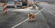 Собака на дороге. Архивное фото