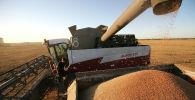 Уборка урожая пшеницы на полях. Архивное фото