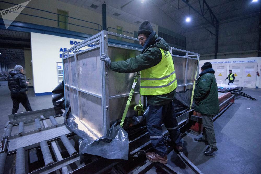 Саудовская Аравия выделила для перевозки животных самолет