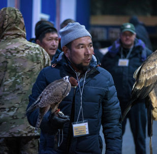 Мужчина с ястреб в аэропорту Манас во время отправки на этнофестиваль Camel Fest в Саудовскую Аравию