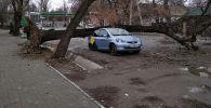 Дерево упало на машину на улице Боконбаева и Турусбекова в Бишкеке