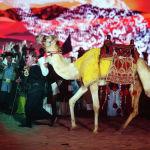 Camel Fest программасында төө чабыш, төөлөрдүн талантын тартуулоо, төөнүн терисинен жасалган буюмдардын көргөзмөсү каралган