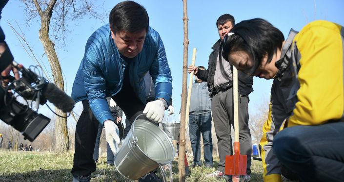 Сотрудники аппарата правительства во главе с премьер-министром Мухаммедкалыем Абылгазиевым очистили от мусора территорию парка Победы имени Даира Асанова и посадили деревья