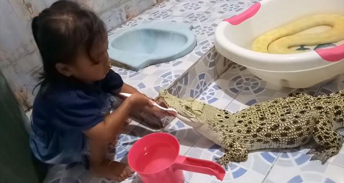 Социалдык тармакта кичинекей кыз крокодилдин тишин тазалап жаткан видео ылдамдык менен тарады.