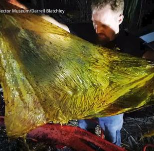 Жыл сайын дүйнөдө үч миллион тонна желим таштанды ыргытылат. Анын 1,2 миллион тоннасы океанга түшөт.