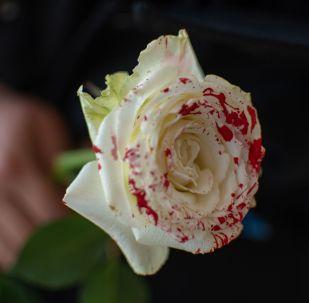 Девушка держит розу. Архивное фото