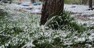 Снег на траве. Архивное фото
