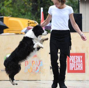 Танец с собакой породы бордер-колли. Архивное фото