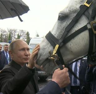 Президент КР Сооронбай Жээнбеков подарил главе РФ Владимиру Путину орловского скакуна и щенка тайгана.
