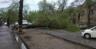 В Бишкеке на улице Логвиненко между улицей Фрунзе и проспектом Жибек Жолу рухнуло дерево