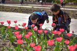 Дети нюхают распустившиеся тюльпаны на клумбах Бишкека