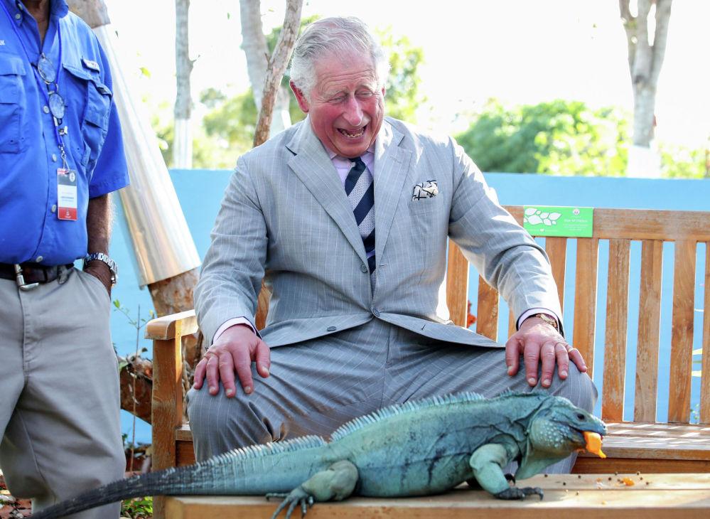 Британский принц Чарльз с голубой игуаной по кличке Питер в ботаническом парке королевы Елизаветы II на Каймановых островах