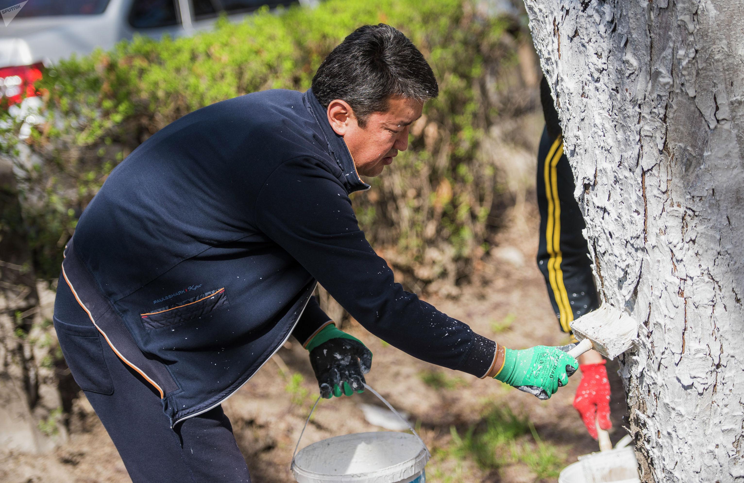 Депутат Жогорку Кенеша Нурбек Алимбеков белит дерево в рамках проекта Sputnik Кыргызстан Слуга народа