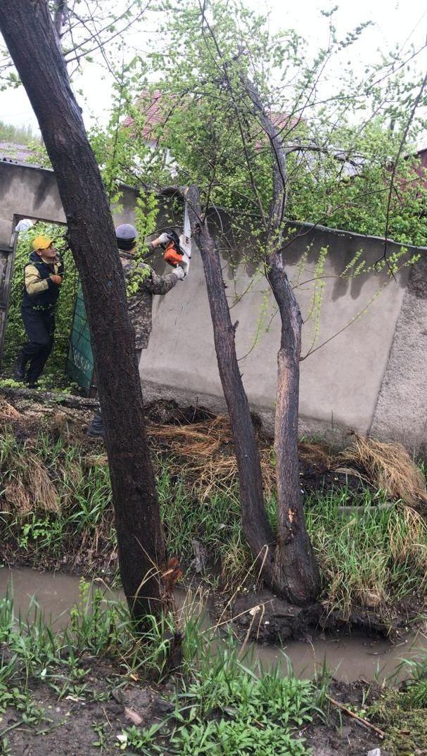 Бригада МП Бишкекзеленхоз  убрало дерево, упавшего на дорогу