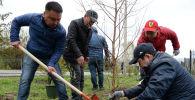 Сотрудники Аппарата президента КР посадили саженцы можжевельника и березы в мемориальном комплексе Ата-Бейит