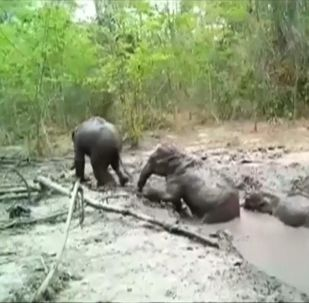 Инцидент произошел в природном парке на северо-востоке Таиланда.