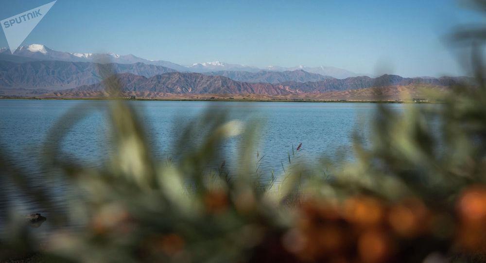 Облепиха на берегу Иссык-Куля. Архивное фото