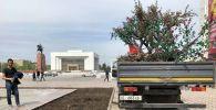На площади Ала-Тоо в Бишкеке демонтировали искусственные деревья