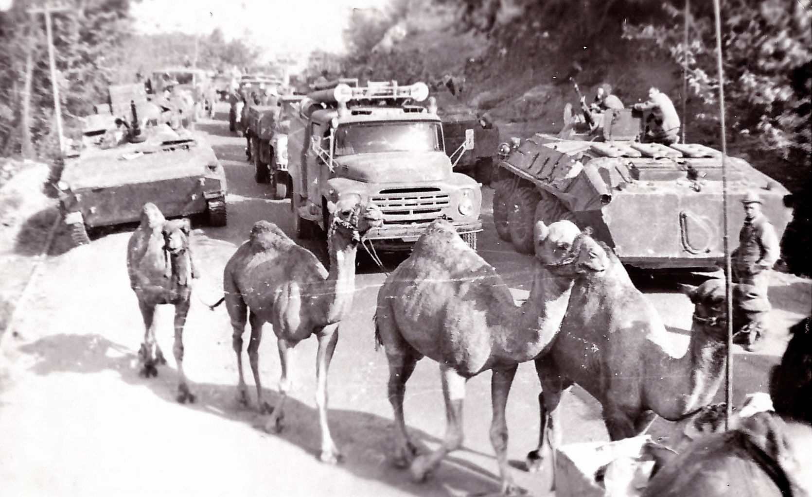 29 октября 1981 года второй мусульманский батальон был введен в северную провинцию Афганистана  Фарьяб