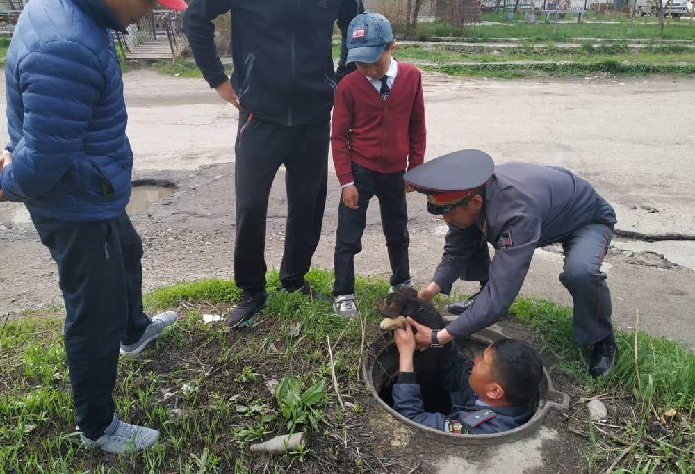 В Караколе милиционеры вытащили из люка упавшего туда щенка