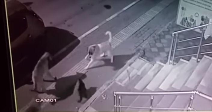 Видео снято камерой наружного наблюдения в Турции.