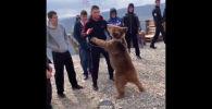 В Сети опубликовано новое видео, где чемпион UFC Хабиб Нурмагомедов опять борется с медвежонком.