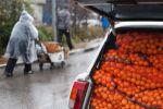 Продажа мандаринов. Архивное фото