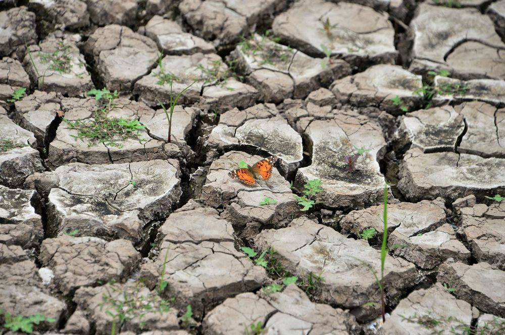 Тегусигальпадагы (Гондурас) суу сактагычтын түбүндөгү көпөлөк. Кургакчылык суунун деңгээлинин азайышына алып келди.