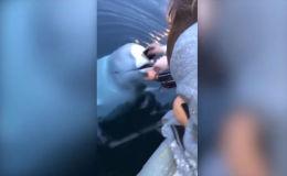 Случай произошел на берегу Норвегии.