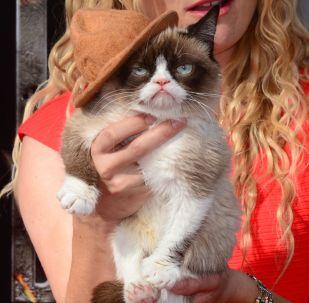 Grumpy Cat приезжает на красную дорожку для церемонии вручения наград MTV 2014 в кинотеатре Nokia в Лос-Анджелесе, штат Калифорния. 13 апреля 2014 года