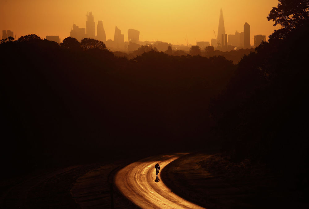 Вид на Ричмонд-парк в Лондоне на рассвете