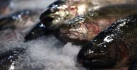 Охлажденная рыба. Архивное фото