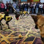 Собака К9 и робот-собака Spot во время конференции Amazon Re:MARS в Лас-Вегасе