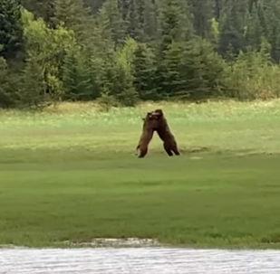 Житель США стал случайным свидетелем необычной схватки медведей.