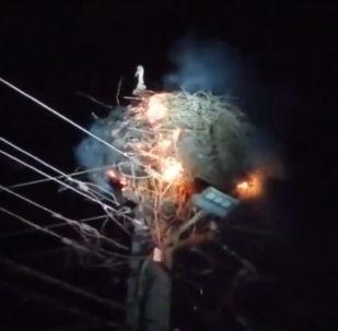 В Сети появилось видео спасения птенцов аиста из горящего гнезда, свитого на опоре линии электропередачи.