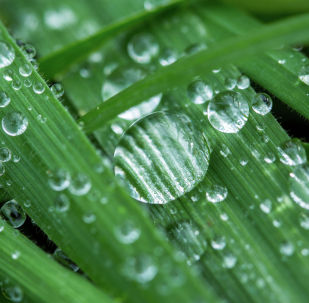 Капли дождя на траве. Архивное фото