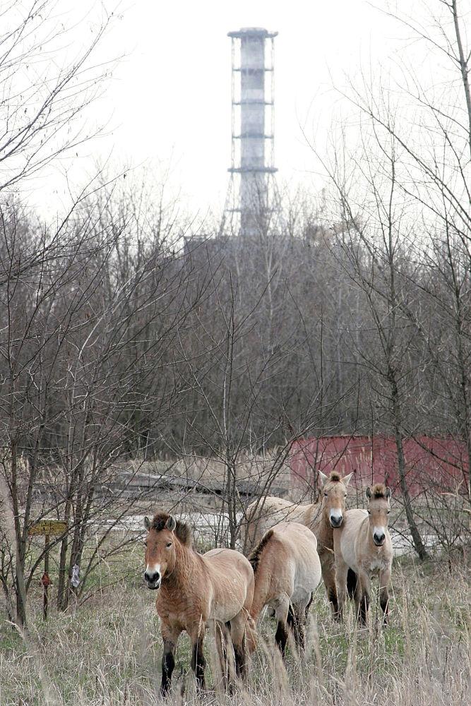 Чернобыль атомдук электр станциясынын 4-блогунун саркофагы