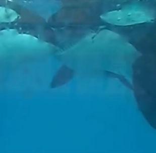 Специалисты вели наблюдения за животными в испанском океанариуме.
