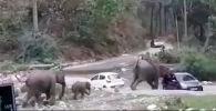В Индии пять слонов атаковали две машины на глазах у туристов и вытолкнули их с дороги.