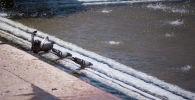 Бишкекте фонтан. Архивдик сүрөт