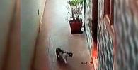 В южной части Индии кобра заползла в жилой дом. К счастью, там находился кот.